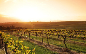 Clare-Valley-Sunrise-Taylors-Vineyard.jpg